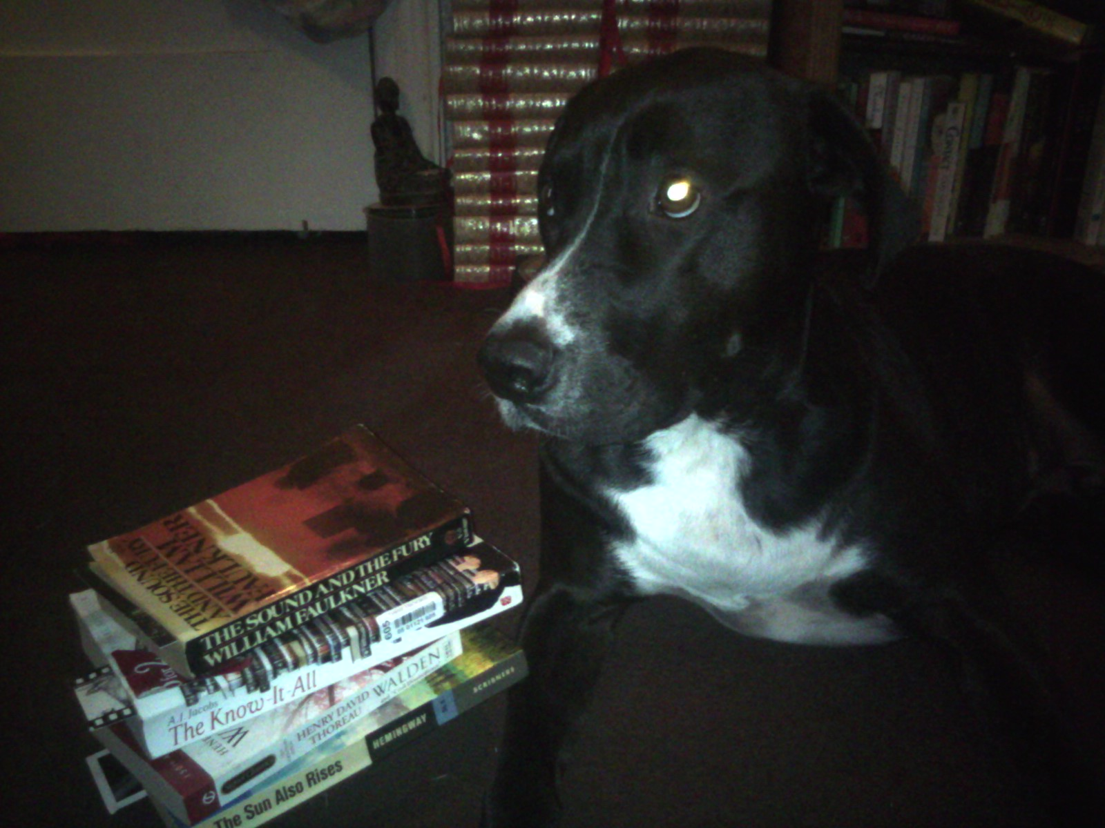 booksdog With the prime time Emmy Awards telecast coming up on September 21, ...